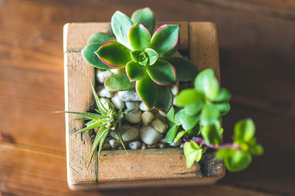 plants0017.jpg