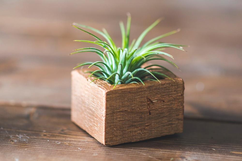 plants0021.jpg