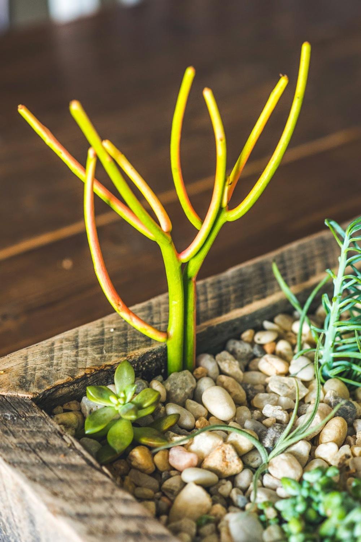 plants0023.jpg