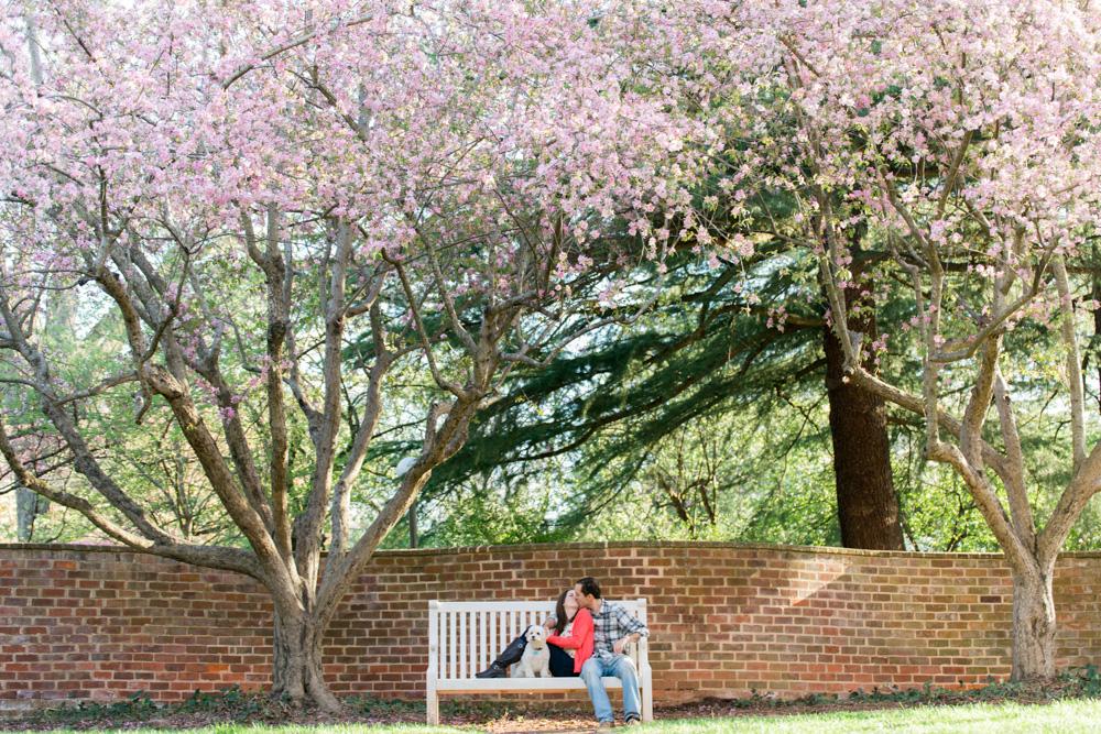 charlotsville.va.engagement.session.uva.dog.love.spring.blooms228.jpg