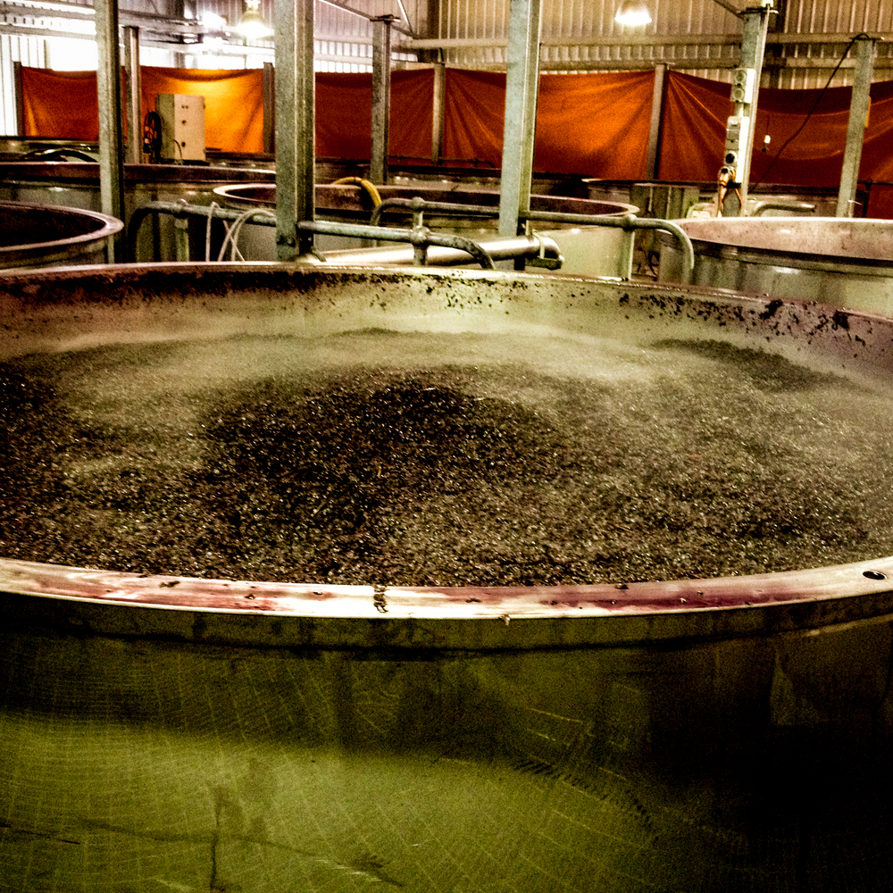 Shiraz grapes in ferment tank