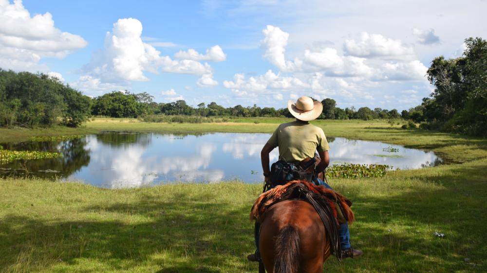 Pantanal, Brazil 2014