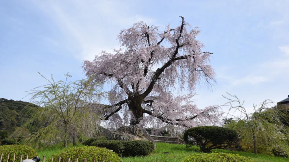 Koyto, Japan 2016