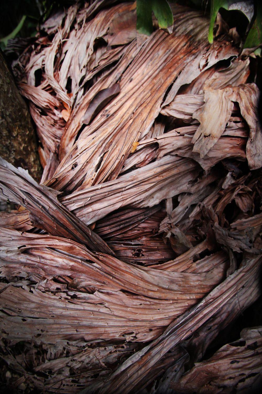 Dry Flowing Leaves Khao Sok.jpg