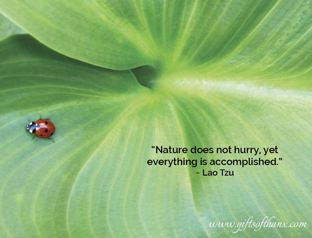 ladybug-thanx-thurs.jpg