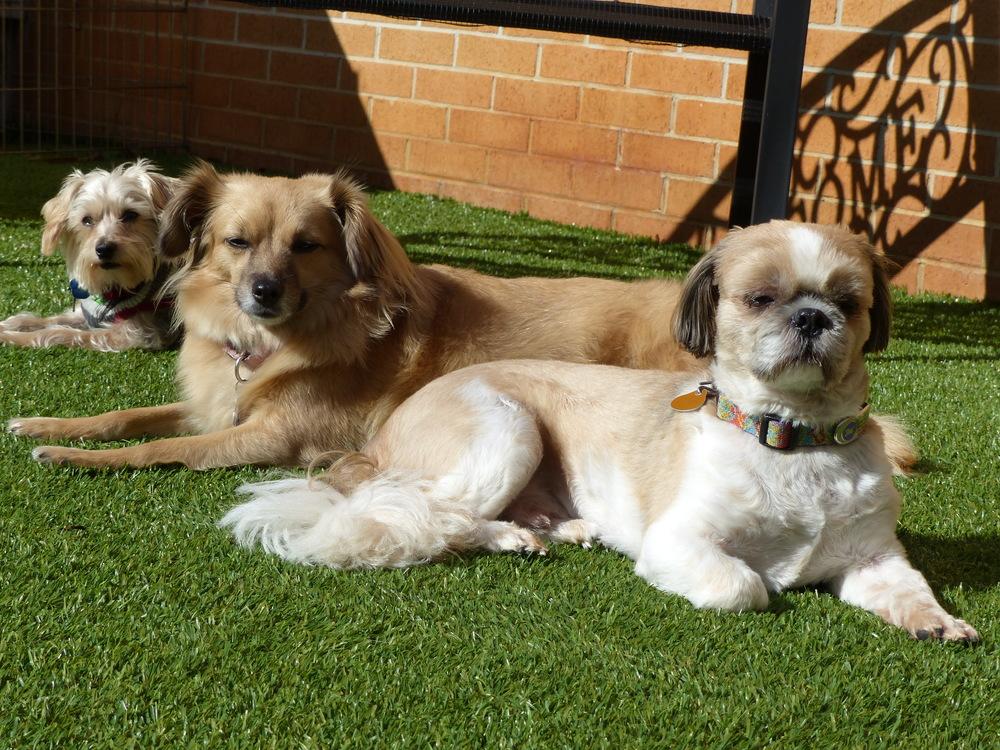 Beau,Dalai&Ollie.JPG