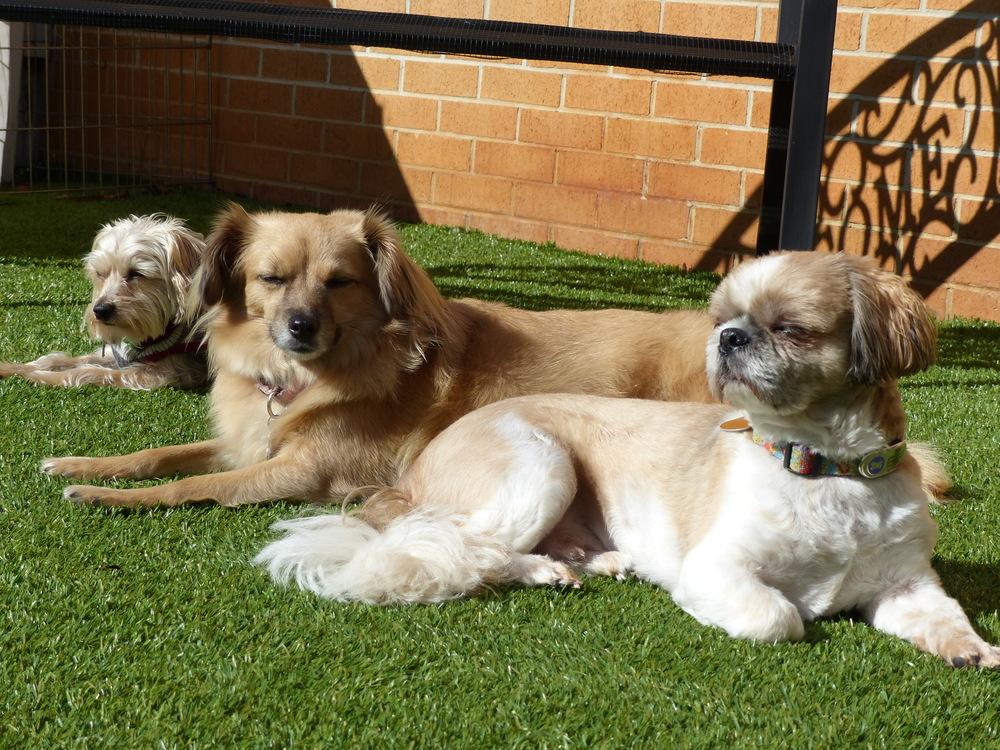 Beau,Dalai&Ollie2.JPG