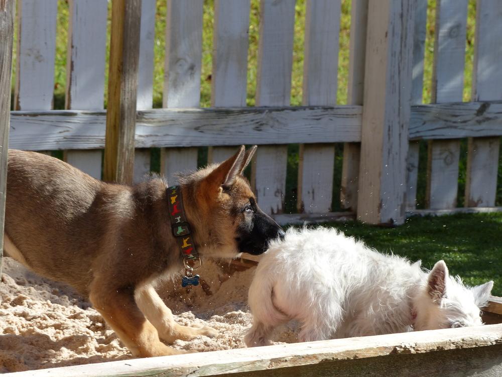 Chaco&Fiona4.JPG