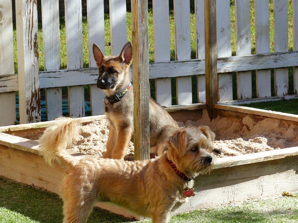Chaco&Lexie.JPG