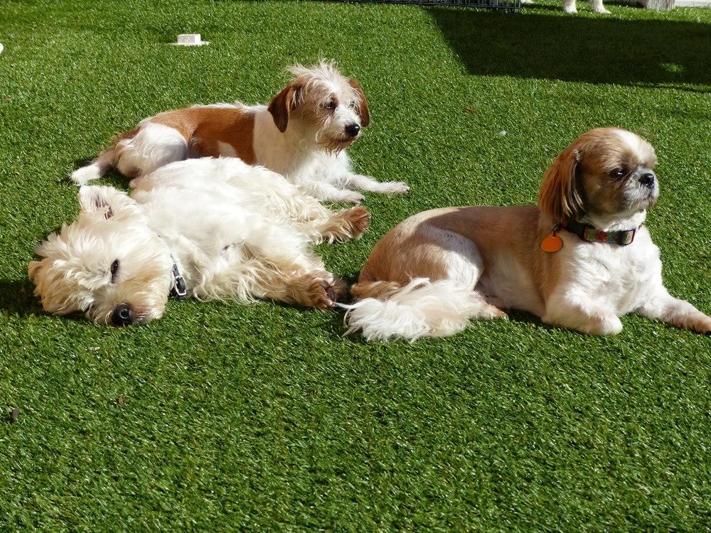 Rory,Ollie&Fredi.JPG
