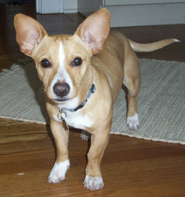 toby coulter trevor chihuahua mix play dog excellent