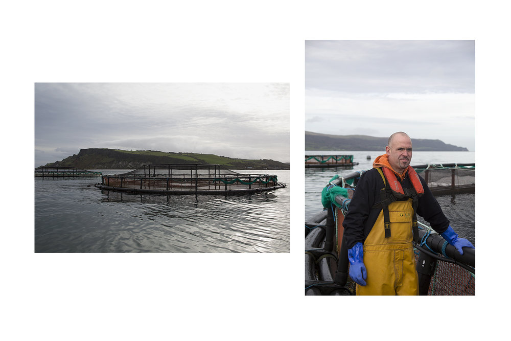 GLENARM ORGANIC SALMON for the Telegraph Magazine