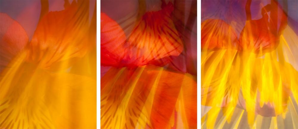 red&yellow.jpg