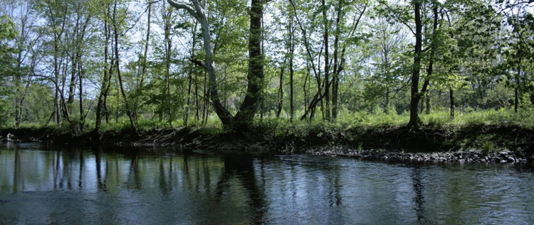 Picture: Need picture used on current about page (river and trees)