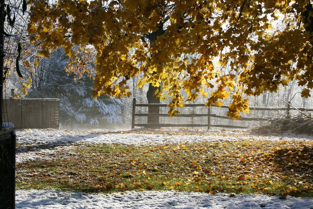 Autumn snow.jpg