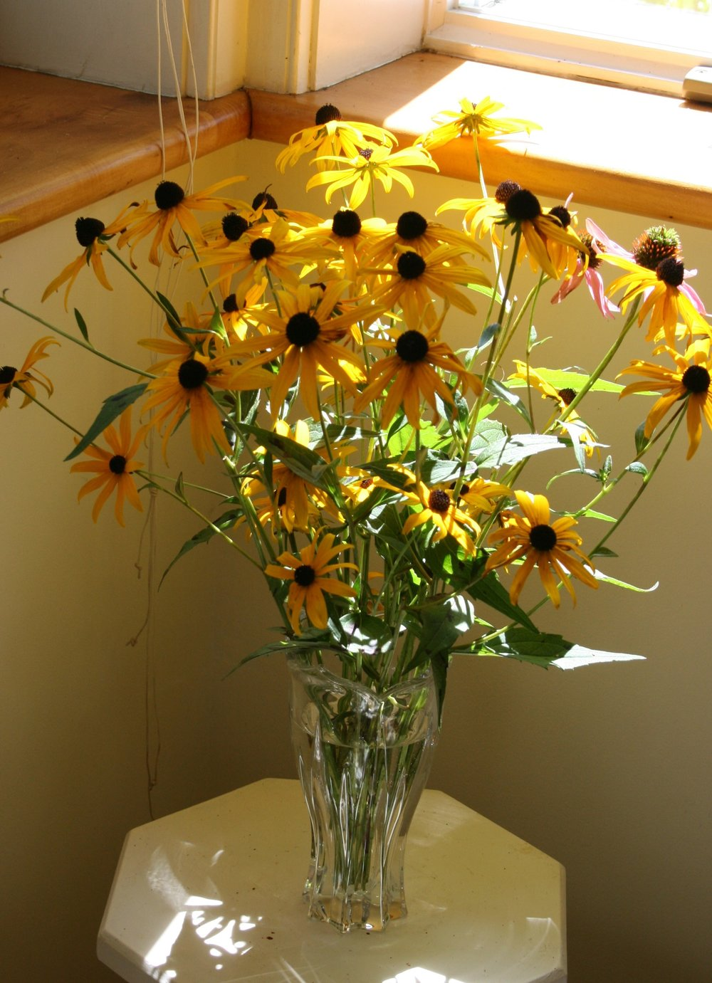 Black-Eyed Susans.jpg