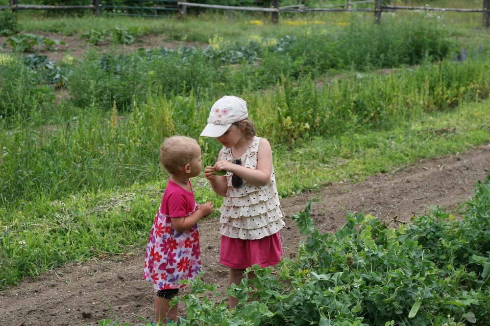Rose teaches Sylvia how to snap the ends off the pea pods.
