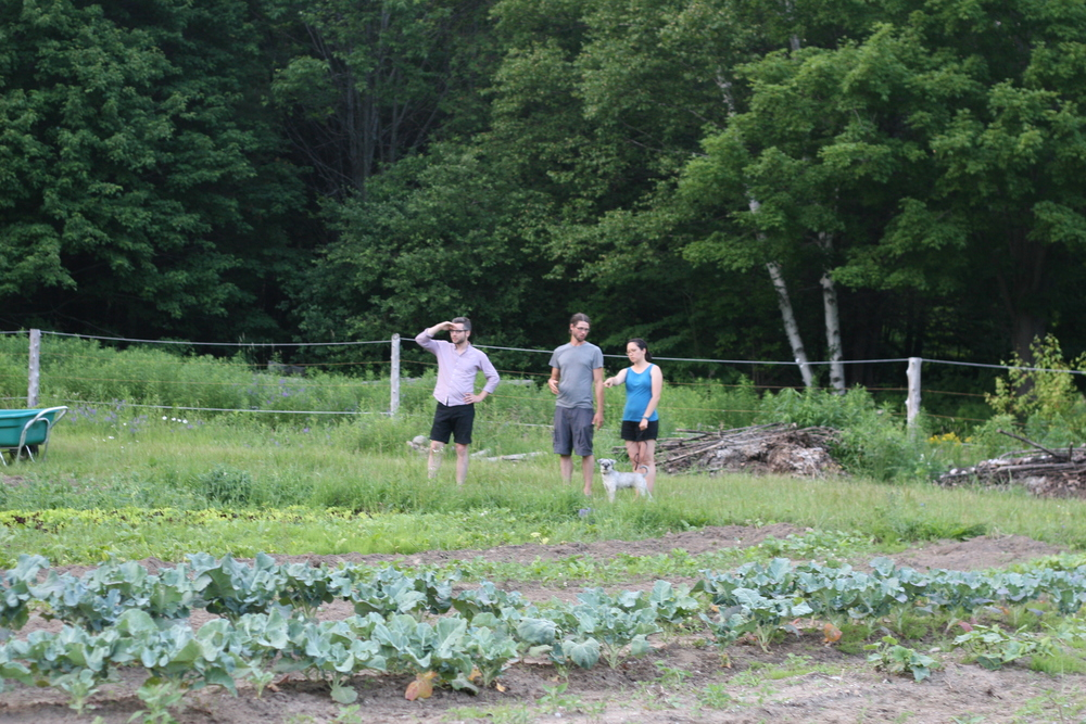 Christine and Eric discuss the veggies while Danny poses for a J. Crew catalog shoot.