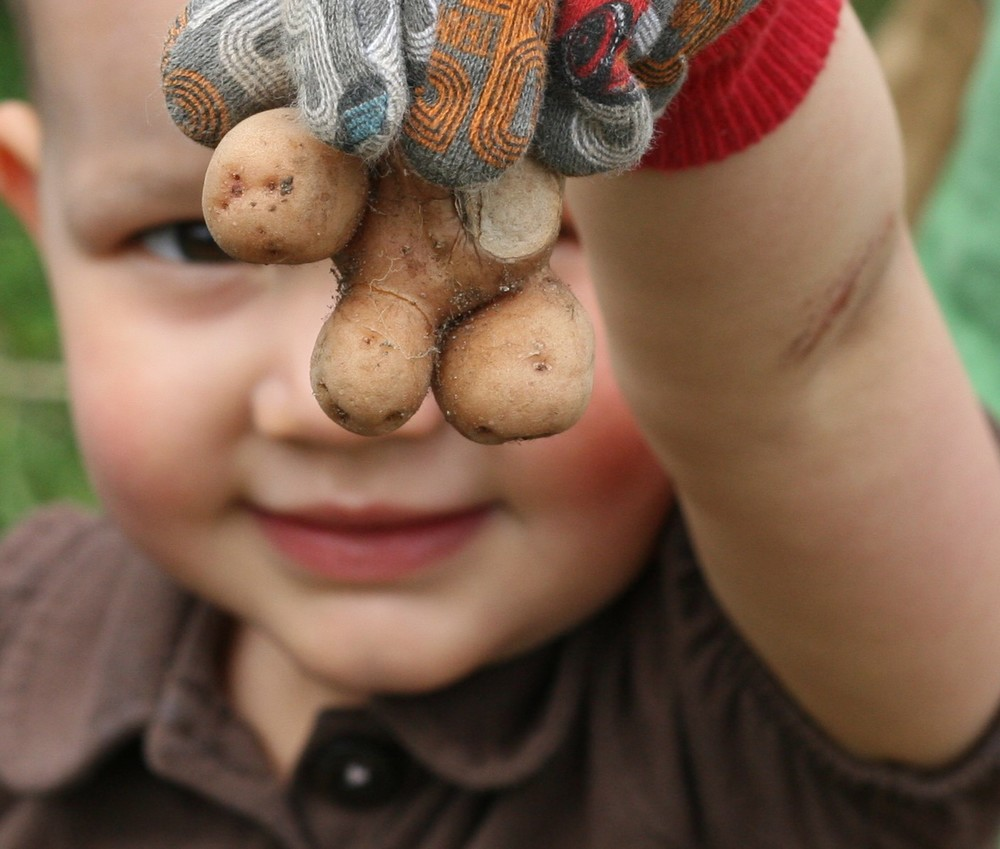 Naturally, the kids' favorite potato seeds are the funny shaped ones.