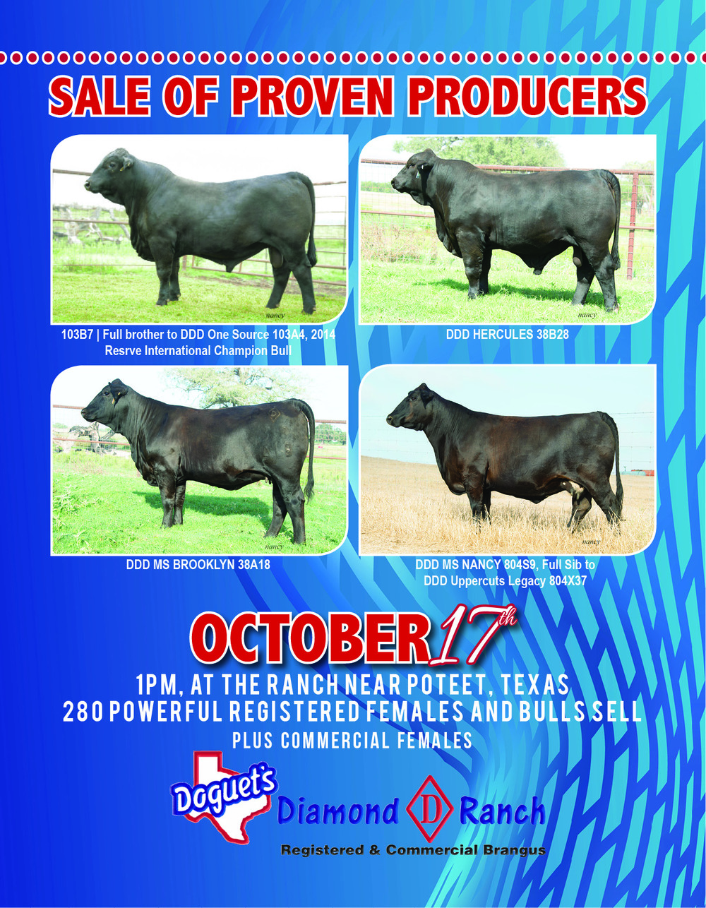 DDD_2015_Sale_Catalog_Cover.jpg