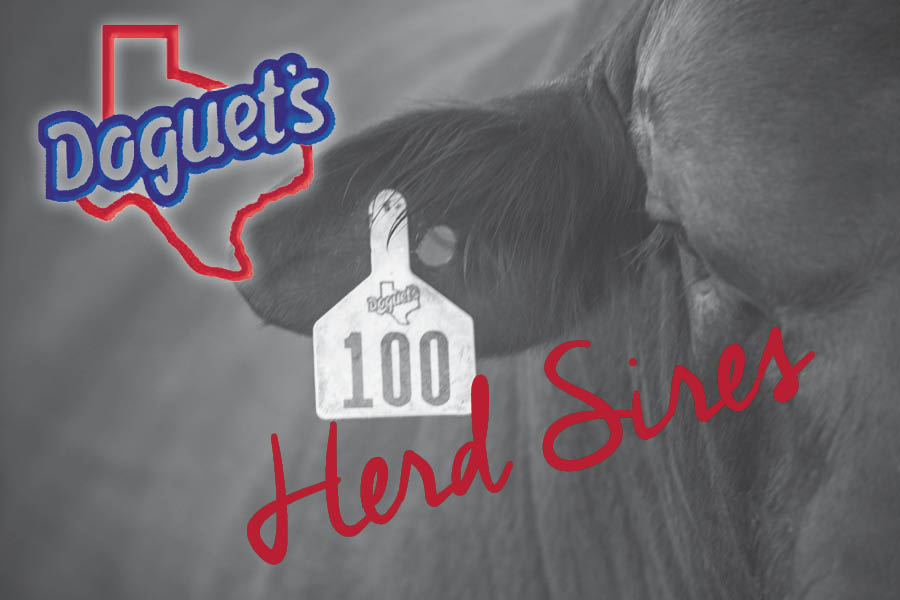 Herd Sires.jpg