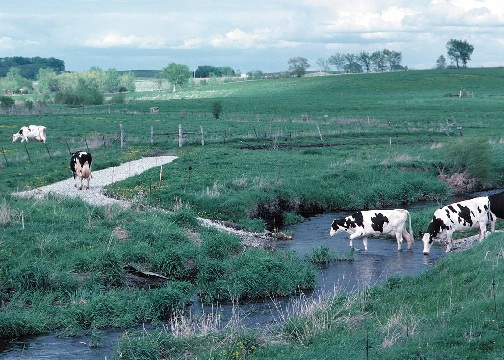 In-stream cattle crossing