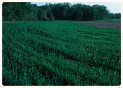 Cover Crop With Buffer