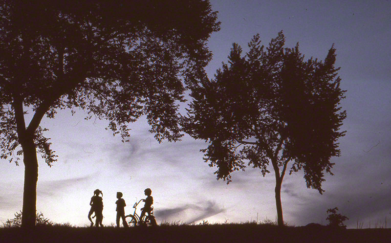 Group of children silhouetted between two trees at dusk