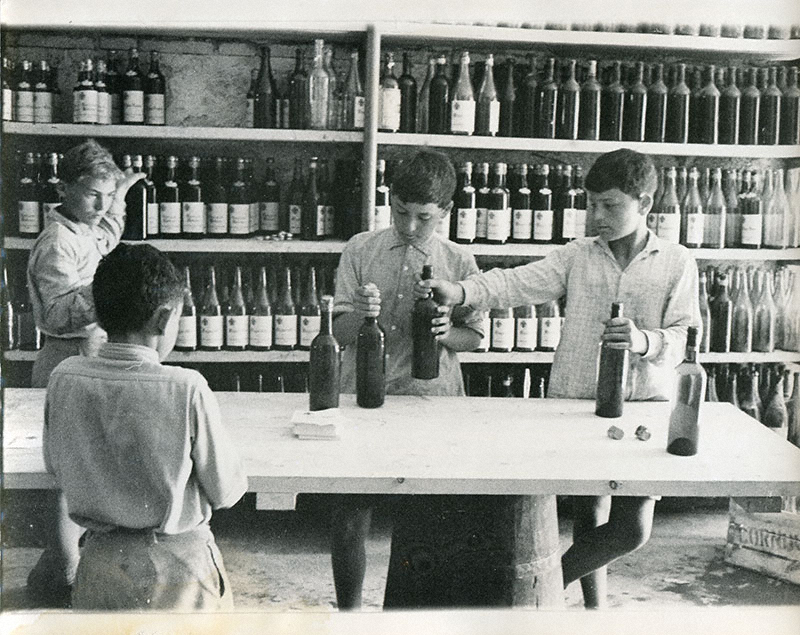 Group of boys bottling wine in the cellar