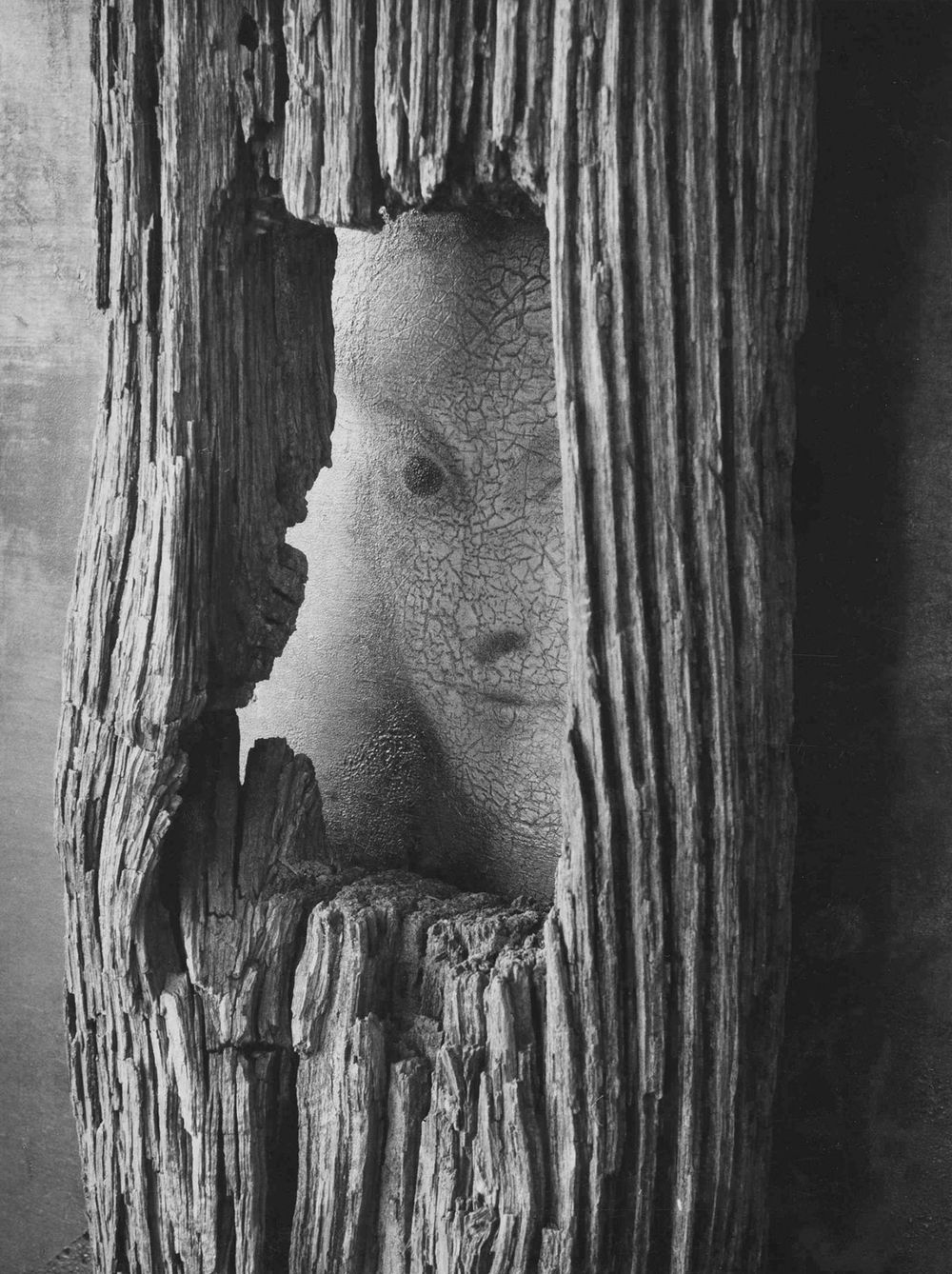 Untitled October 22, 1959 (Face In Wood). Photograph by André Kertész.