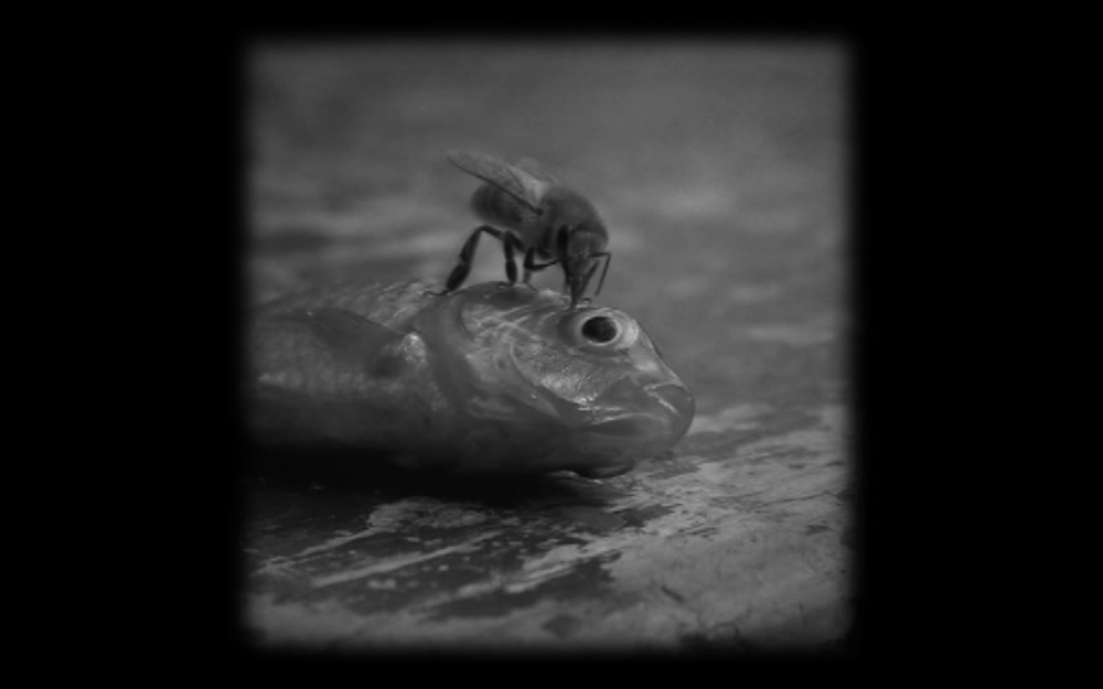 FISH EYE (OJO DE PEZ)  (Gabriel Enrique Vargas, 2008)