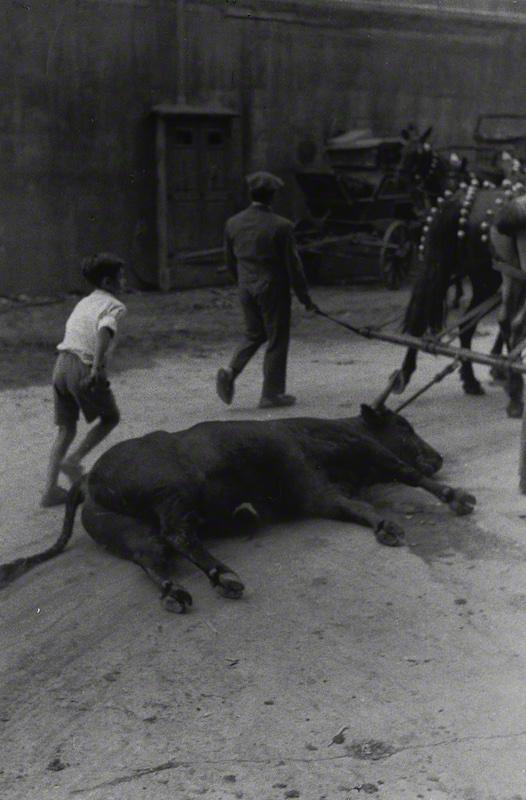 The Bull (1957)