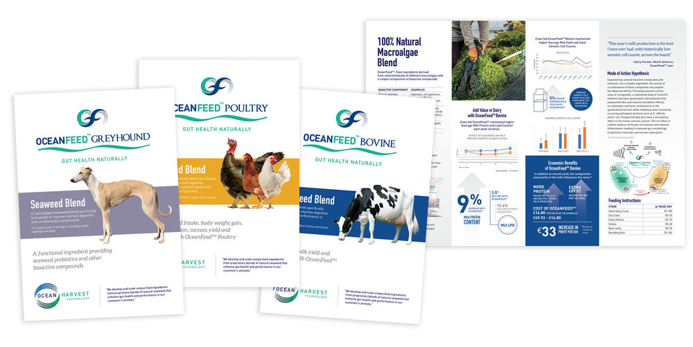 Brochure Systems