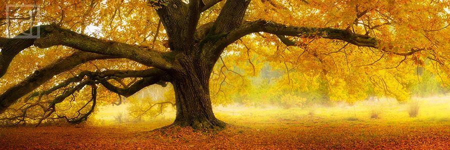 autumn-palette.jpg