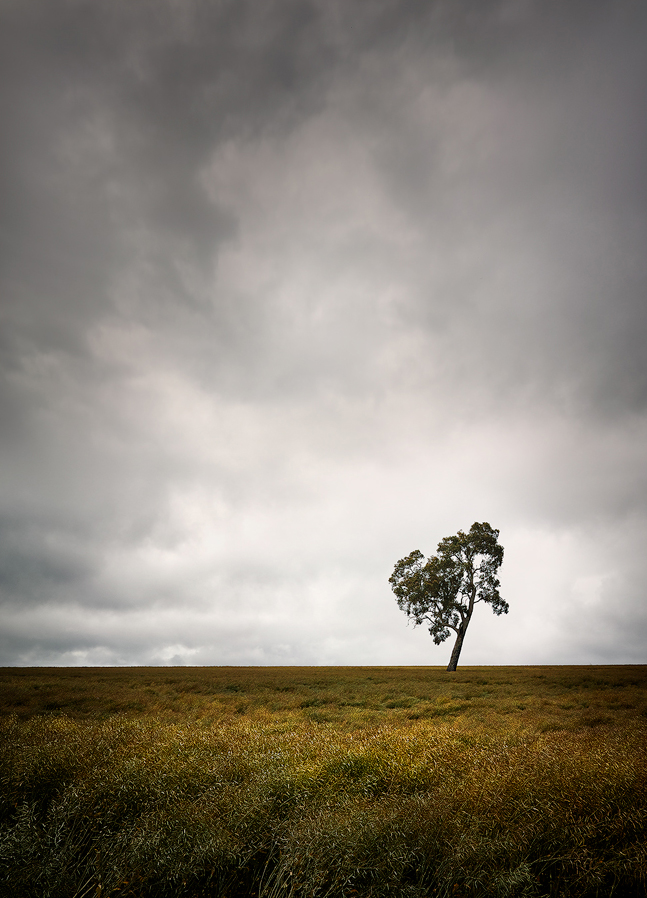 No photographer can resist a lone tree in a field.