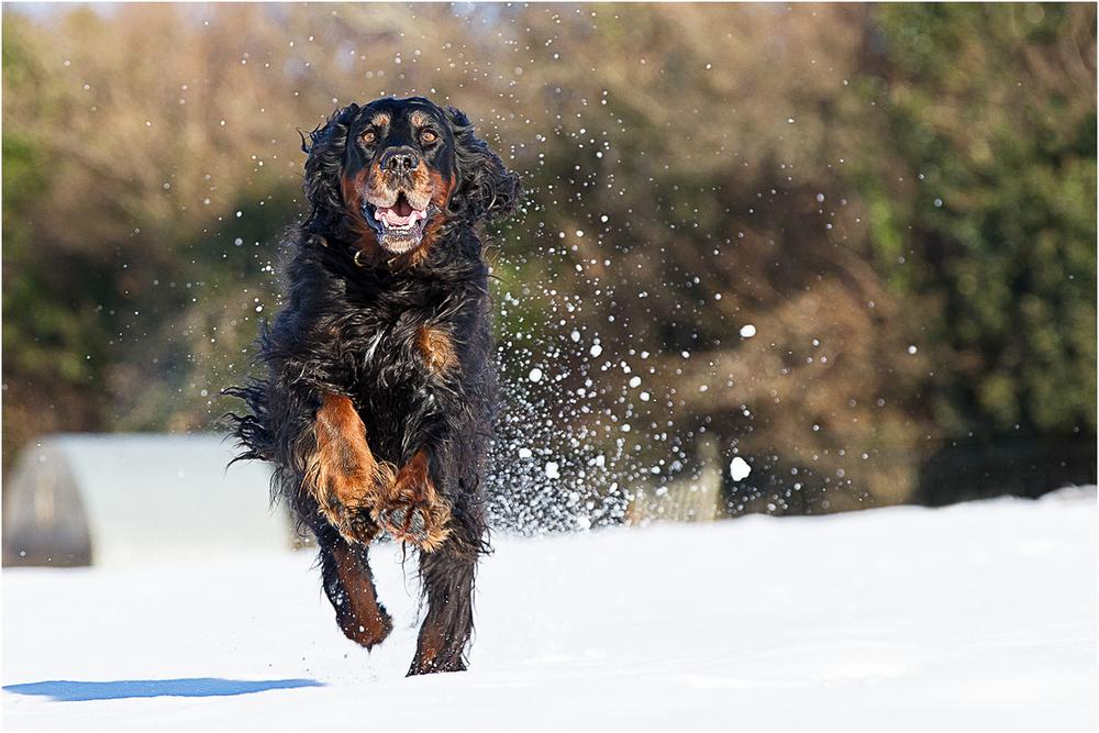 Dog Express.jpg