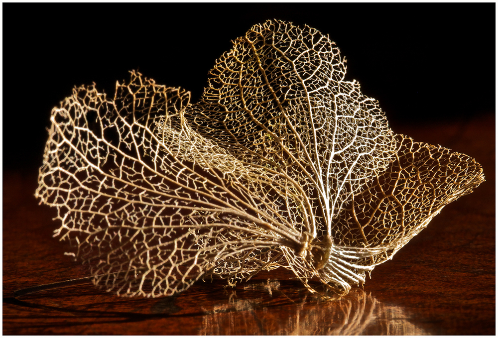 Skeletal Leaf.jpg