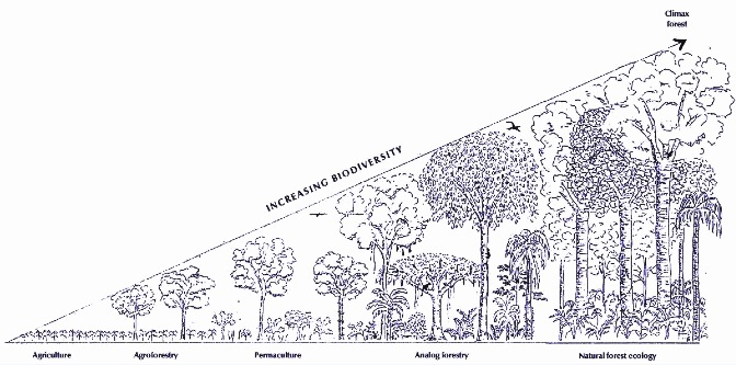 Figure: Analog foresters are guided by structure and function of natural forests and offer similar services of the climax ecology.