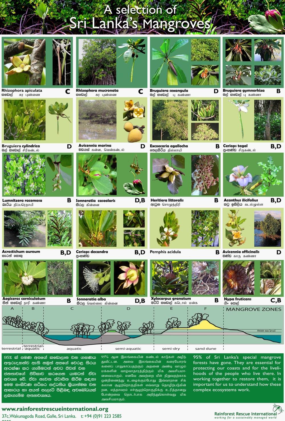 mangrove poster final 1.jpg