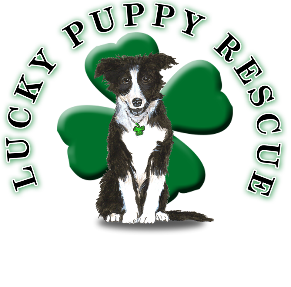 Lucky Puppy Rescue