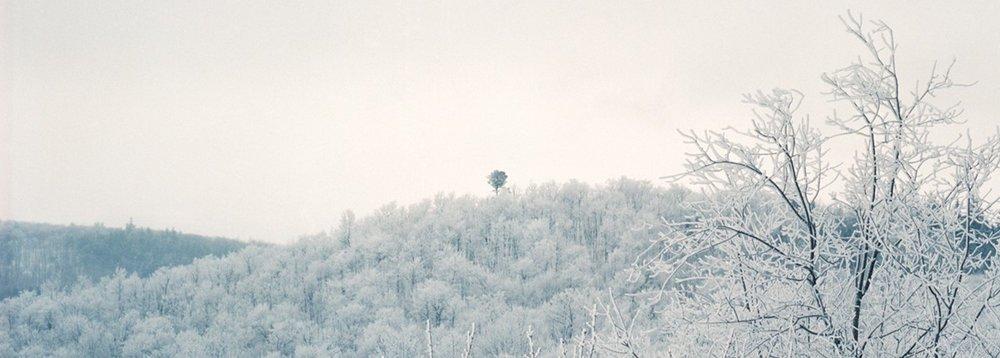 """Sarah Fuller,Panorama,  Old Tree , 2017, Archival Inkjet Print, 120"""" x 43""""."""