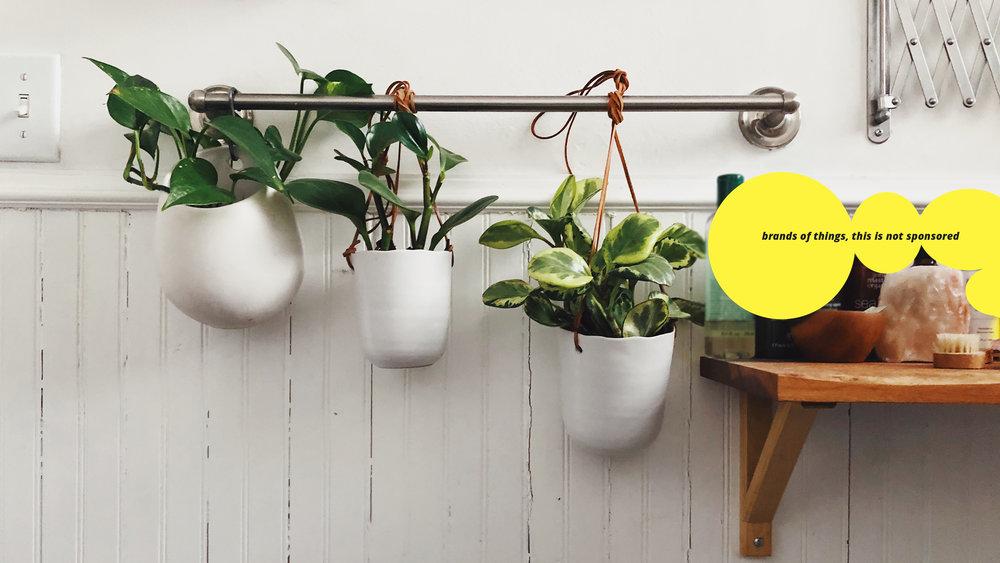 PLANTS! Cherry wood shelf, made in the wood shop with IKEA brackets.