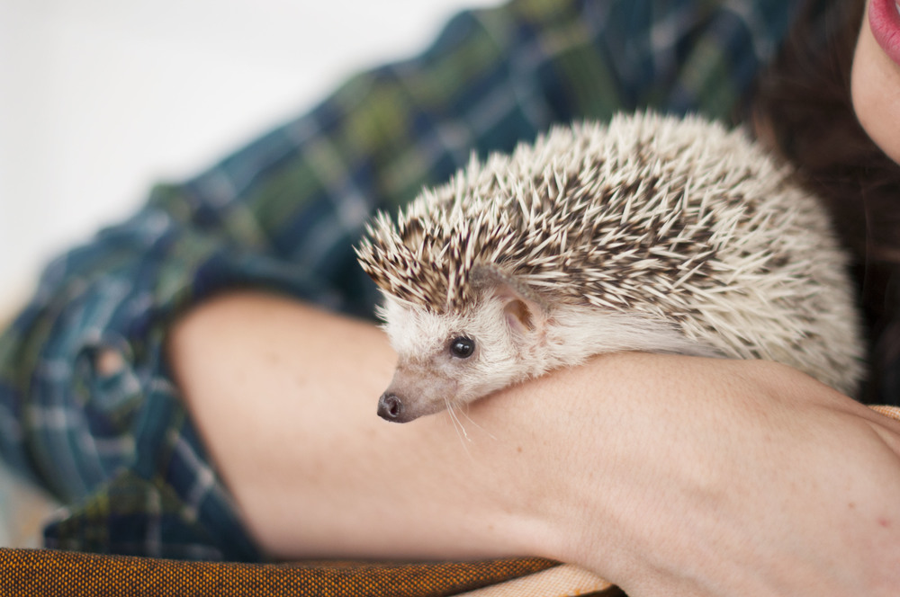 Oh and by the way- did I mention they have a PRECIOUS hedgehog that I love so much named Pippin?! He's my favorite. Could a couple get any cooler?