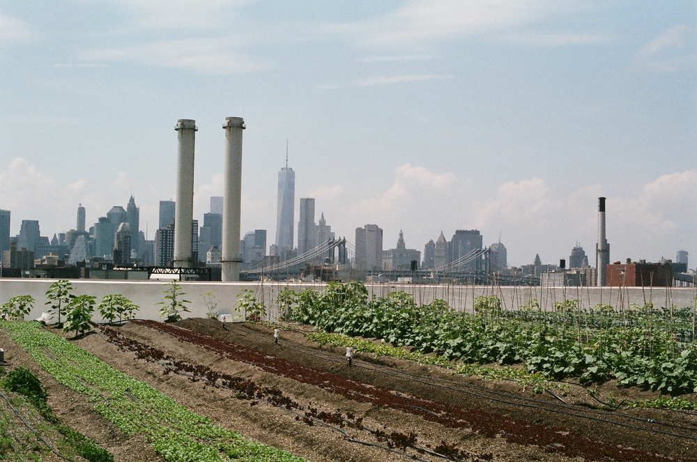 Brooklyn Grange Farm
