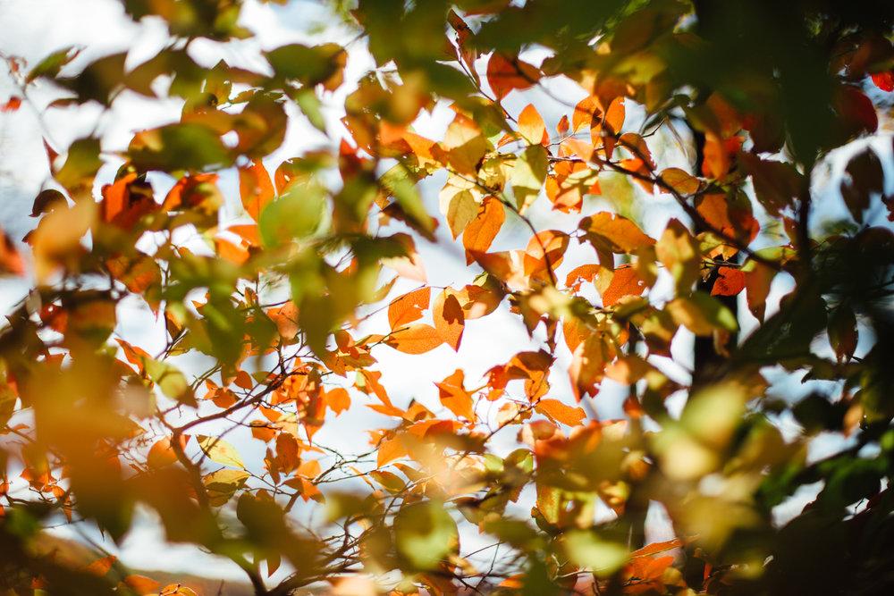 harriman-state-park-fall-9171.jpg