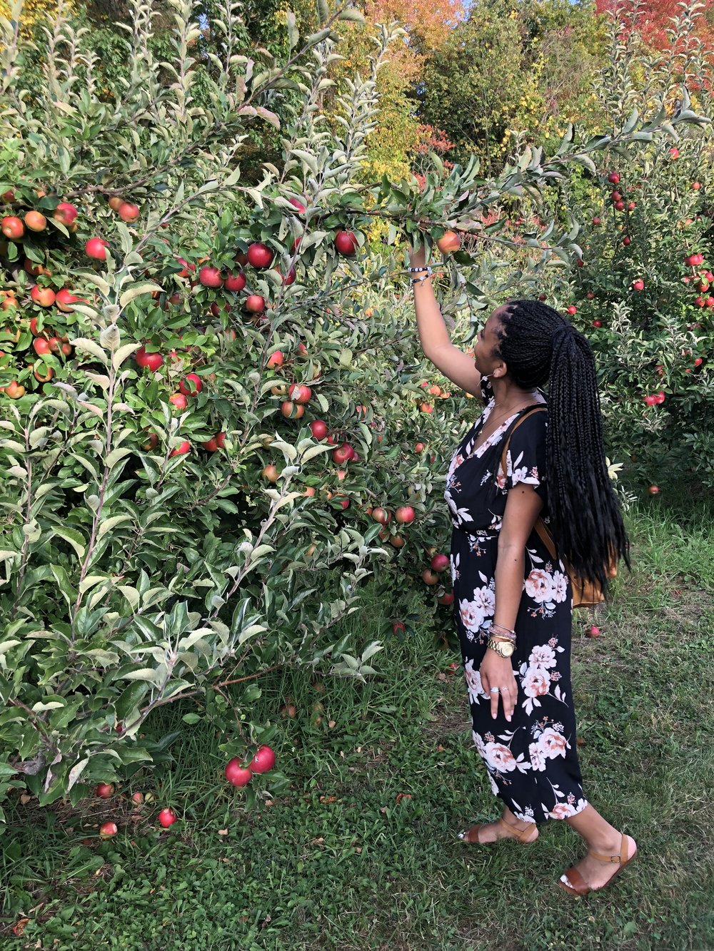 Apple picking and Apple Crisp - The Reign XY