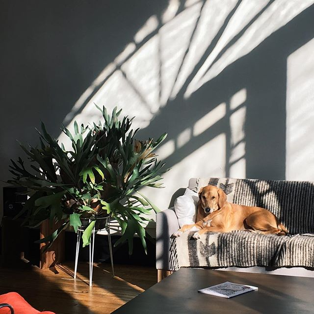 Soaking in that almost weekend light. Happy Friday! @mayamueble blanket #lewissofa