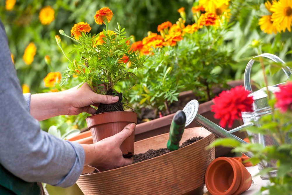 Flower Potting - Plant a flower pot, decorate it and take it hometo enjoy all summer long!Date: Monday, June 4Time: 10am-1pmLocation: Brigade BuildingAges:  11-17Cost: $10 per participantMax # of Participants: 12