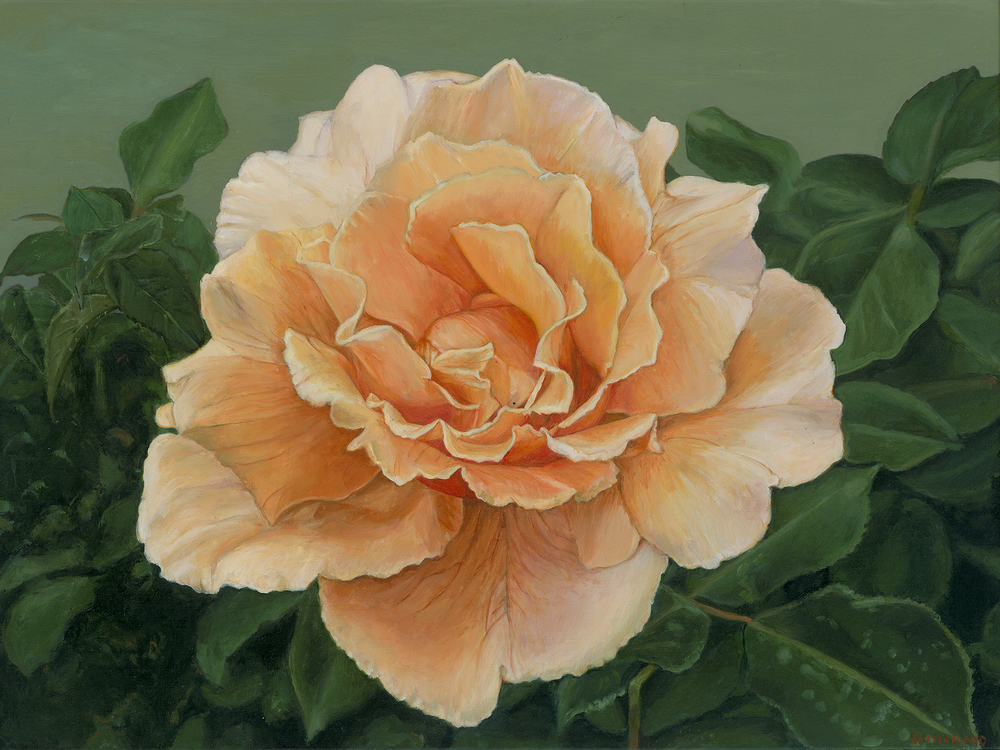 Pale Orange Rose on Green Ground