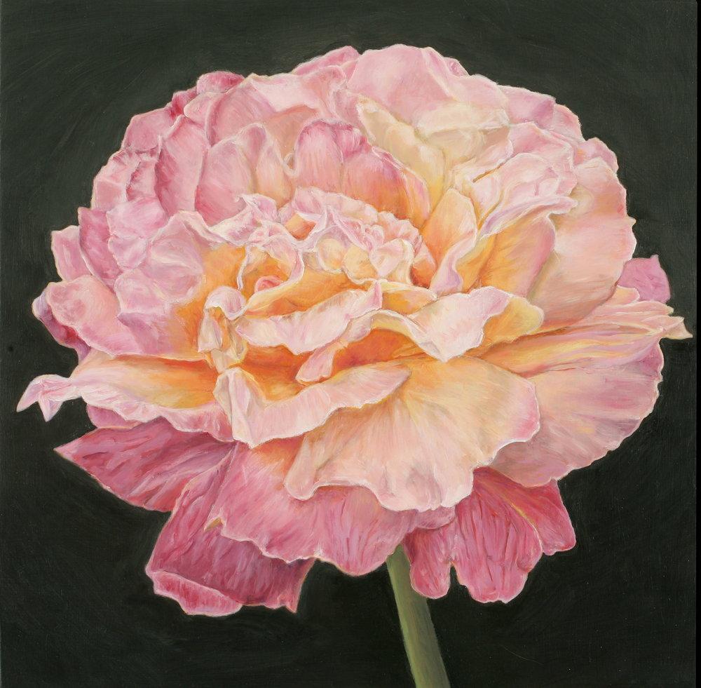 Rose #4